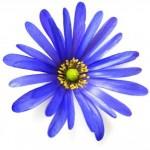 bla-blomma_2761481